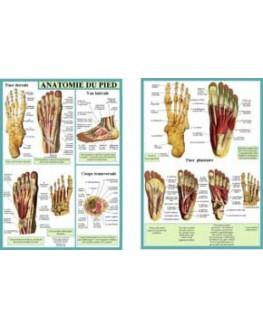 Anatomie du pied (Planche A4 double)