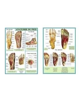 Planches - Anatomie du pied (Planche A4 double)